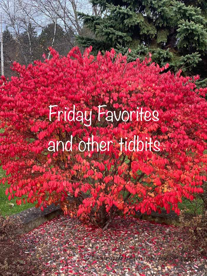 Friday Favorites and other tidbits